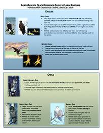 Raptor Guide